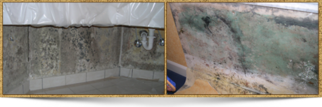 Mold Examples